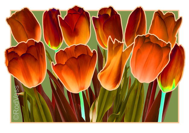 Tulips Dark Orange - By Rod Vass