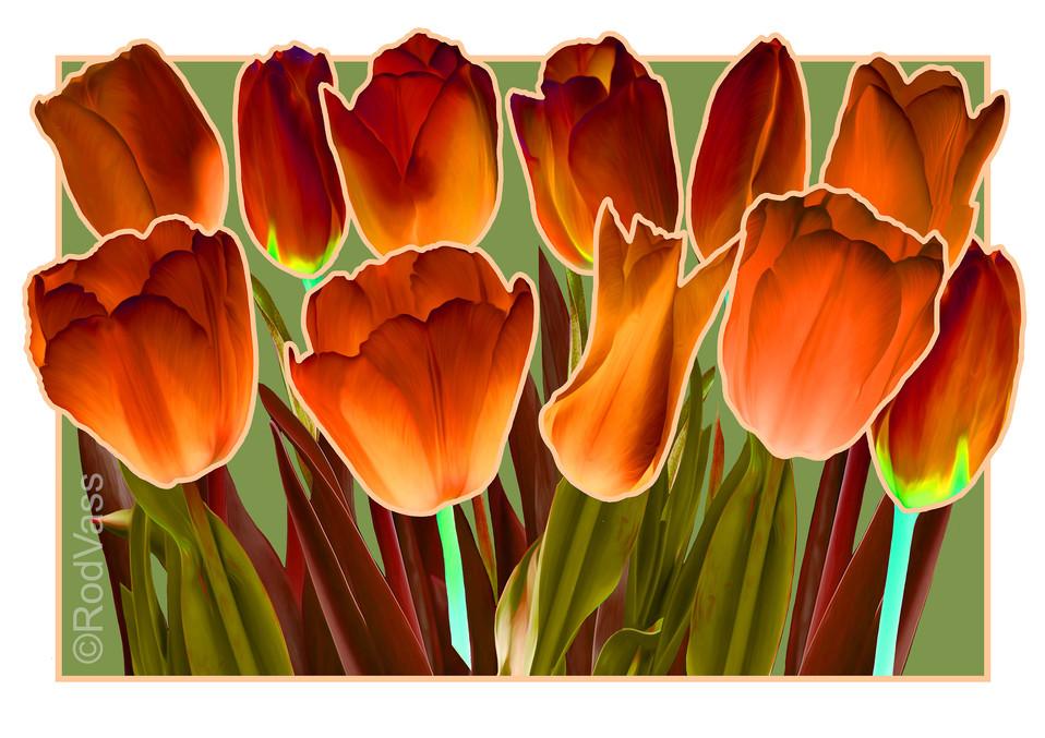 Tulips Dark Orange - By Rod Vass
