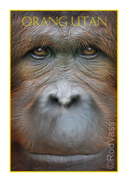 Orang Utan - By Rod Vass