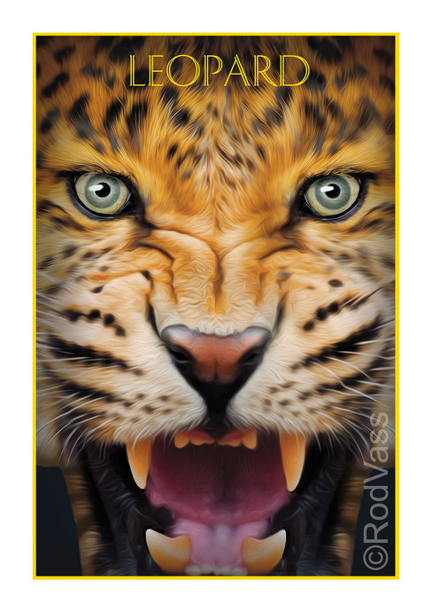 Leopard - By Rod Vass