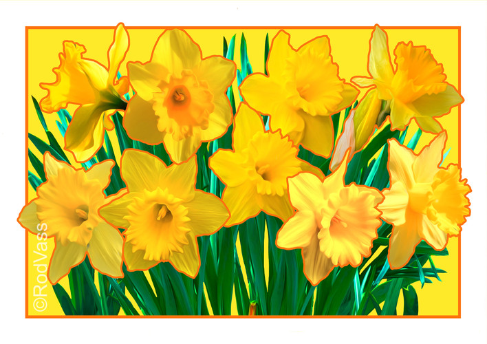 Daffodils Yellow - By Rod Vass