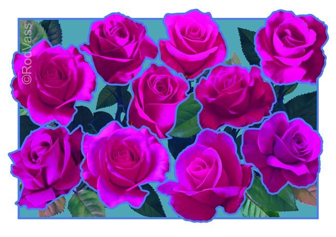Roses Purple - By Rod Vass