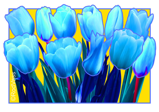 Tulips Blue - By Rod Vass