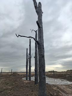 Tolkien battlefield trees