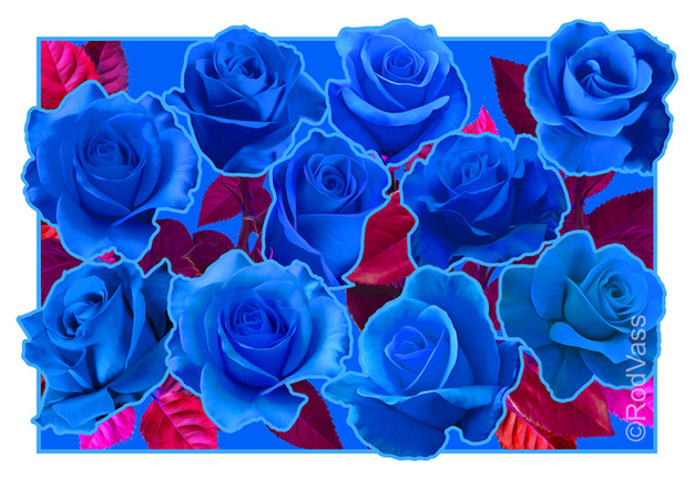 Roses Blue - By Rod Vass
