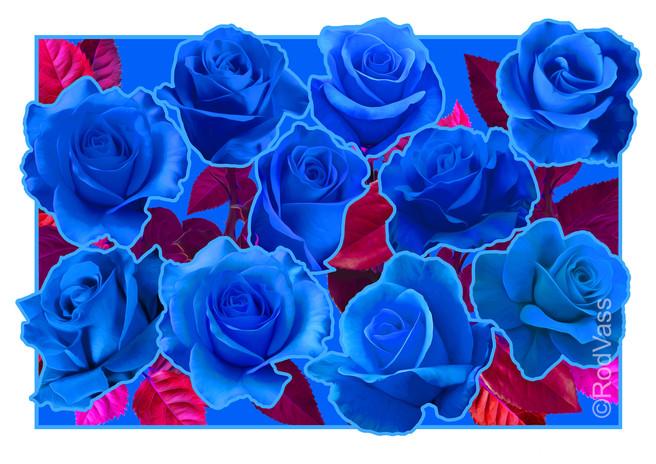 Roses Blue - By Rod Vass