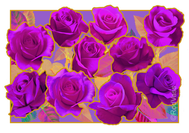 Roses Magenta - By Rod Vass