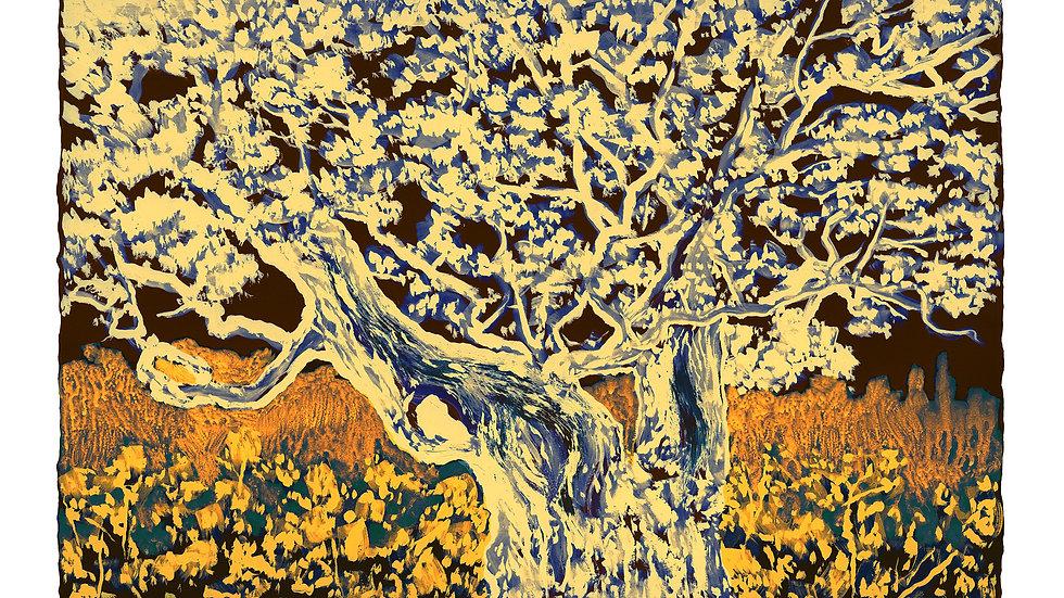 Oak in Russet