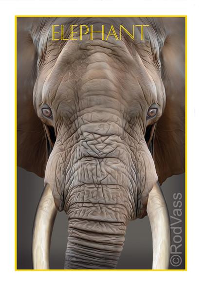 Elephant - By Rod Vass