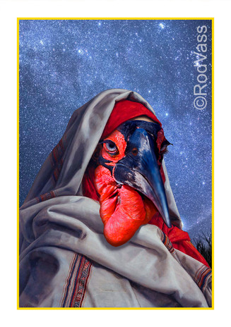 The Great Hornbill - By Rod Vass