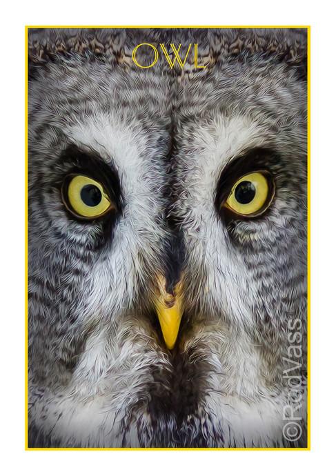 Owl - By Rod Vass