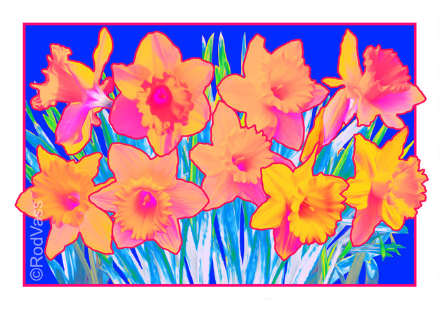 Daffodils Pink - By Rod Vass