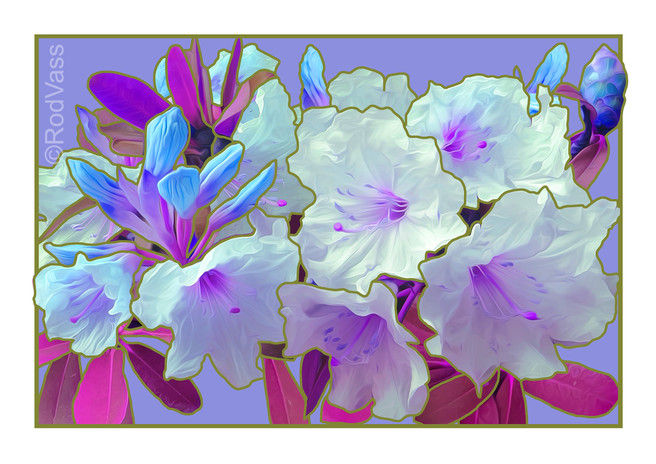 Violet Rhododendron - By Rod Vass