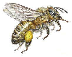 Bee-by-Dave-Hopkins.jpg