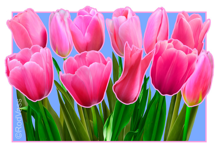 Tulips Pink - By Rod Vass