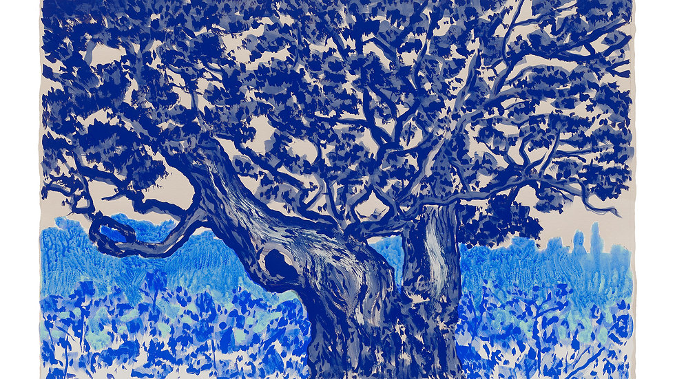 Oak in Blue