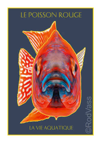 Le Poisson Rouge - By Rod Vass