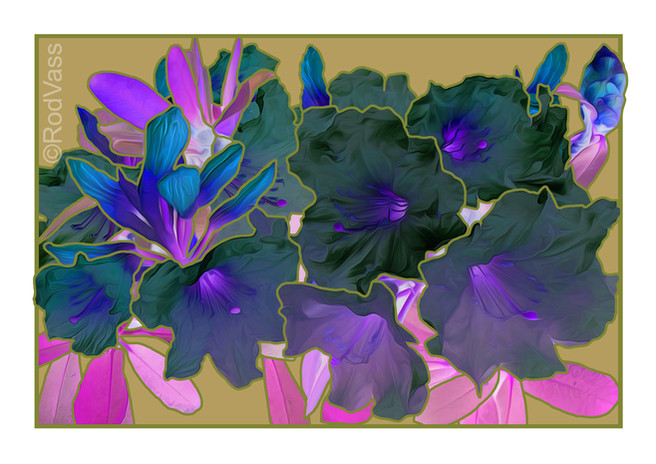 Black Rhododendron - By Rod Vass