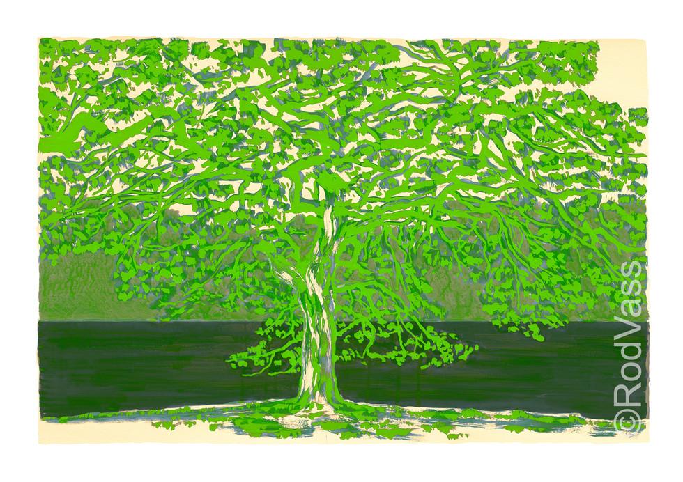 Green Tree - By Rod Vass