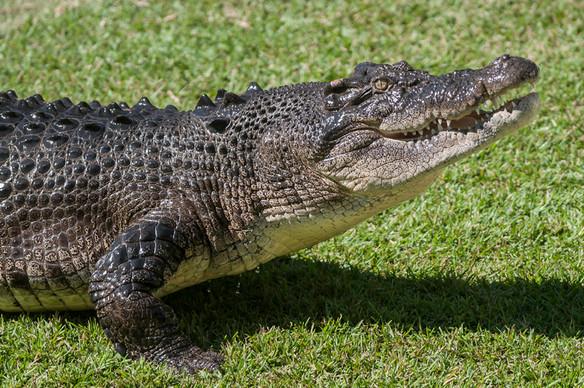 aus zoo croc.jpg