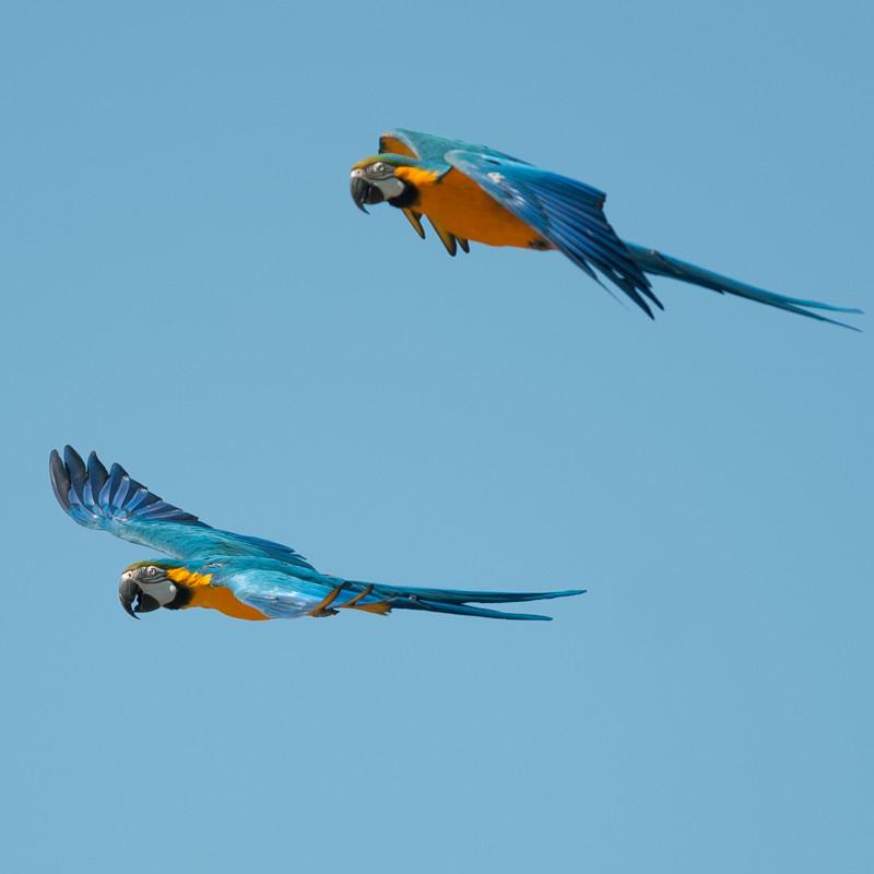 aus zoo birds.jpg