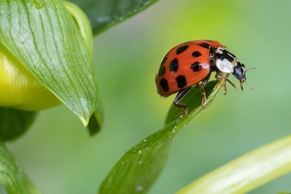Macro course ladybug.jpg