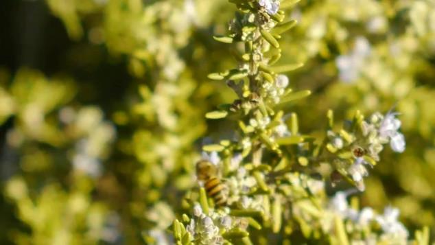 """""""A Bees Life"""" (short film)"""