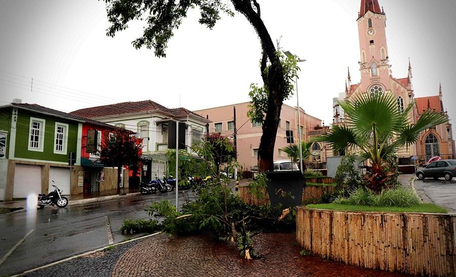 Árvores caem durante temporal