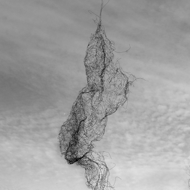 Wilt/houseplant (iterations of ghosts series 1 no. 3)