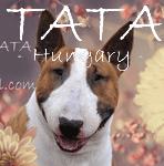 TATA: SPECIALTY & TROPHY SHOW, VI. BULL TERRIER SHOW, TATA, MAĎARSKO /BT + MBT/, 09-05-2015