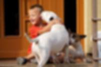 bull terriers with children / bullteriér s deťmi