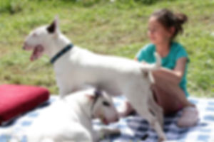 bull terriers with children / bullteriér s deťmi