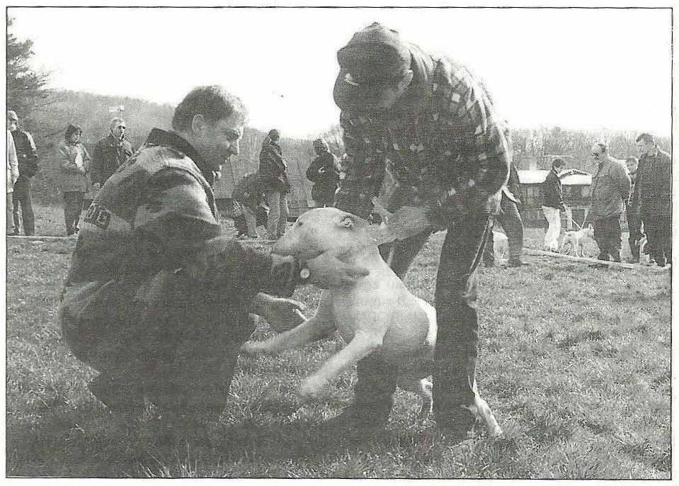 Josef Schneider pri posudzovaní, 26-03-1995, Dubová, III. Bullterrier Weekend SBC