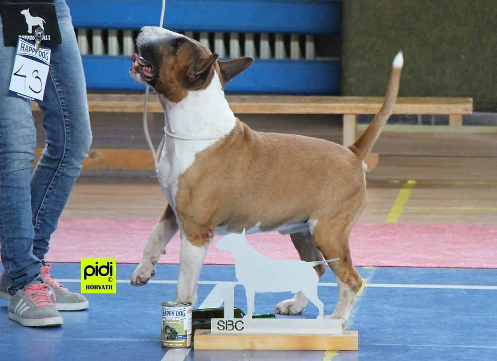 Ballet Van Mer Ecce Bull