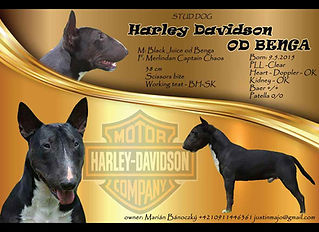 Harley Davidson od Benga