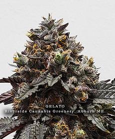 Gelato, Riverside Cannabis Greenery Aubu