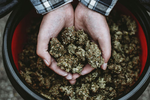 Riverside Cannabis Greenery Auburn Me, F