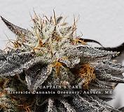 Captain's Cake Riverside Cannabis Greenery
