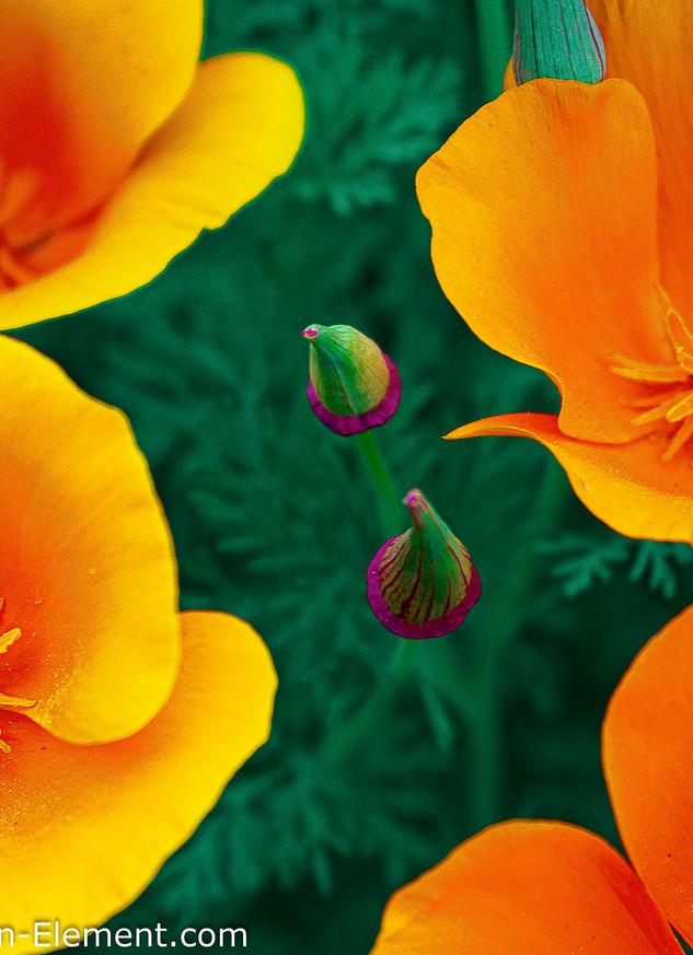 Flavo Flor 2