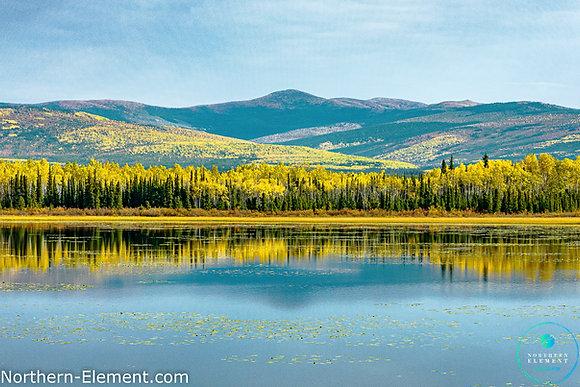 Yukon Yellow