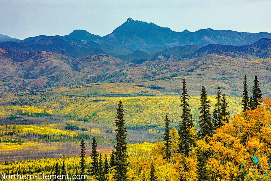 Yukon's Sea of Autumn