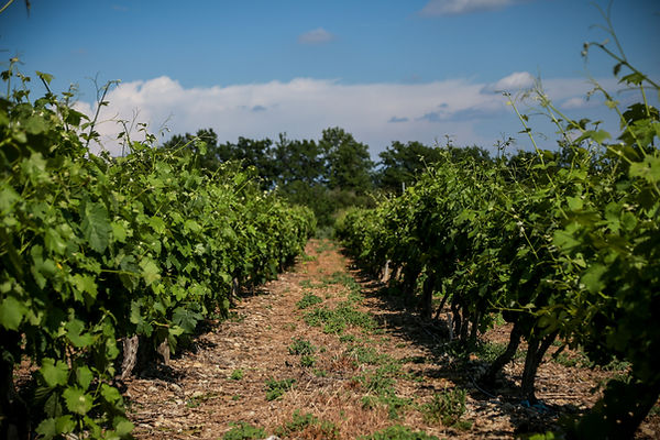 Domaine-Pere-Leon-by-GuillaumeETLaurie-d