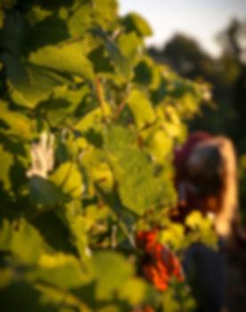 eonotourisme, visite de cave, vigneron, vin, producteur de vin, vallon, lagorce