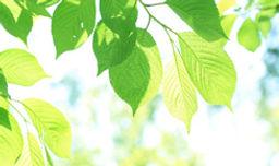 太陽光と葉