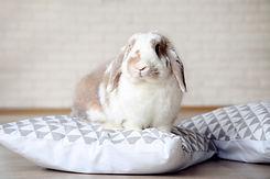 ウサギとお布団