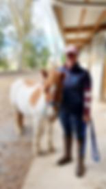 Woman leadingpint miniature horse outside stable