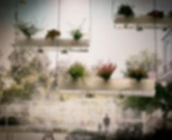 Fog_Garden_BIO 50_edited.jpg
