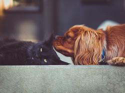 犬猫.jpg