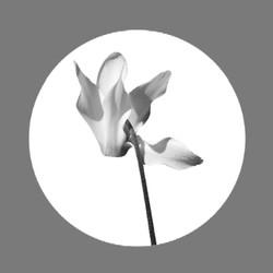 Cyclamen Logo