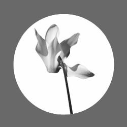 Cyclamen Logo Dark20